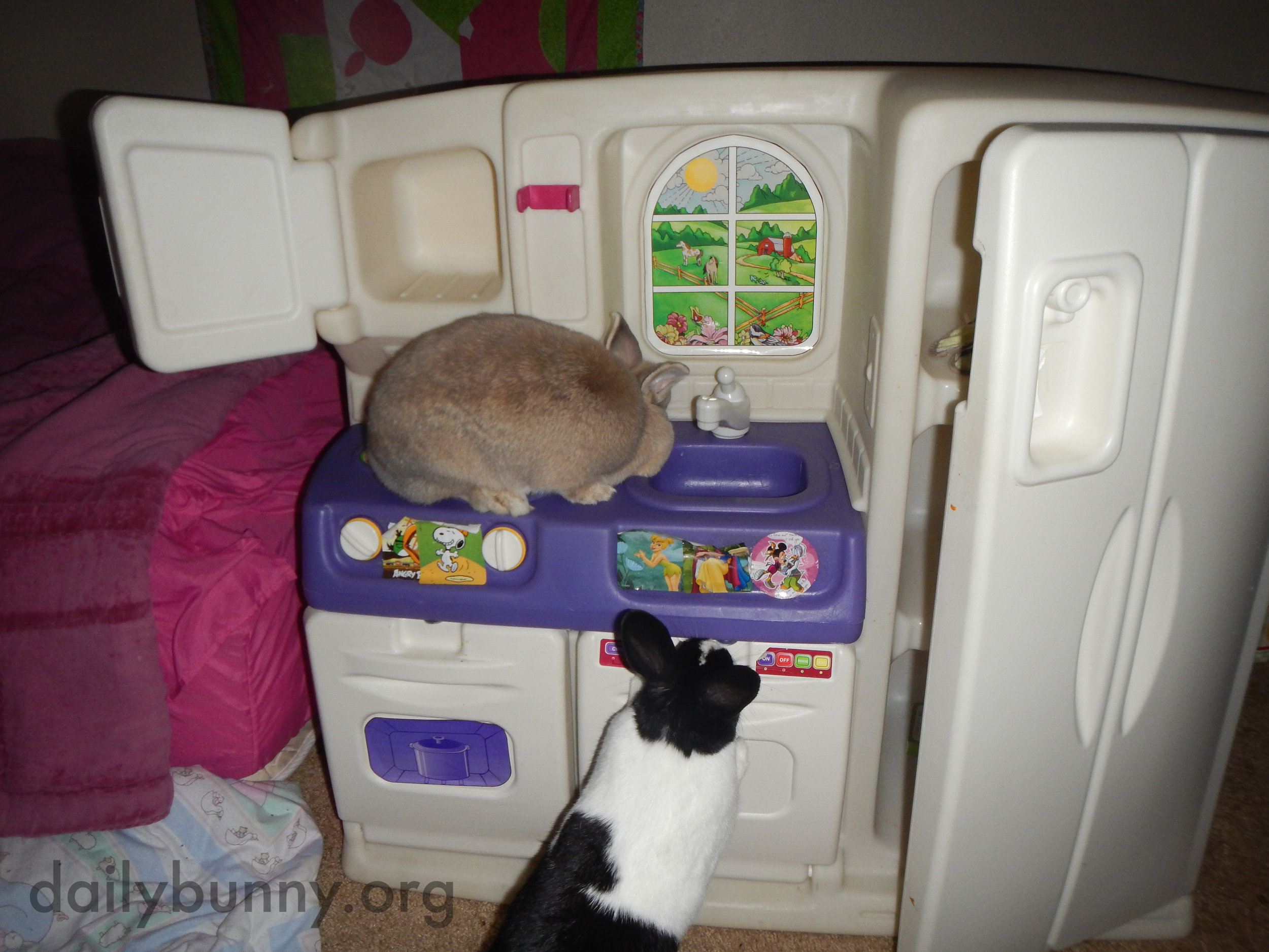 Bunnies Explore a Kitchen That's a Little More Bunny-Sized 1
