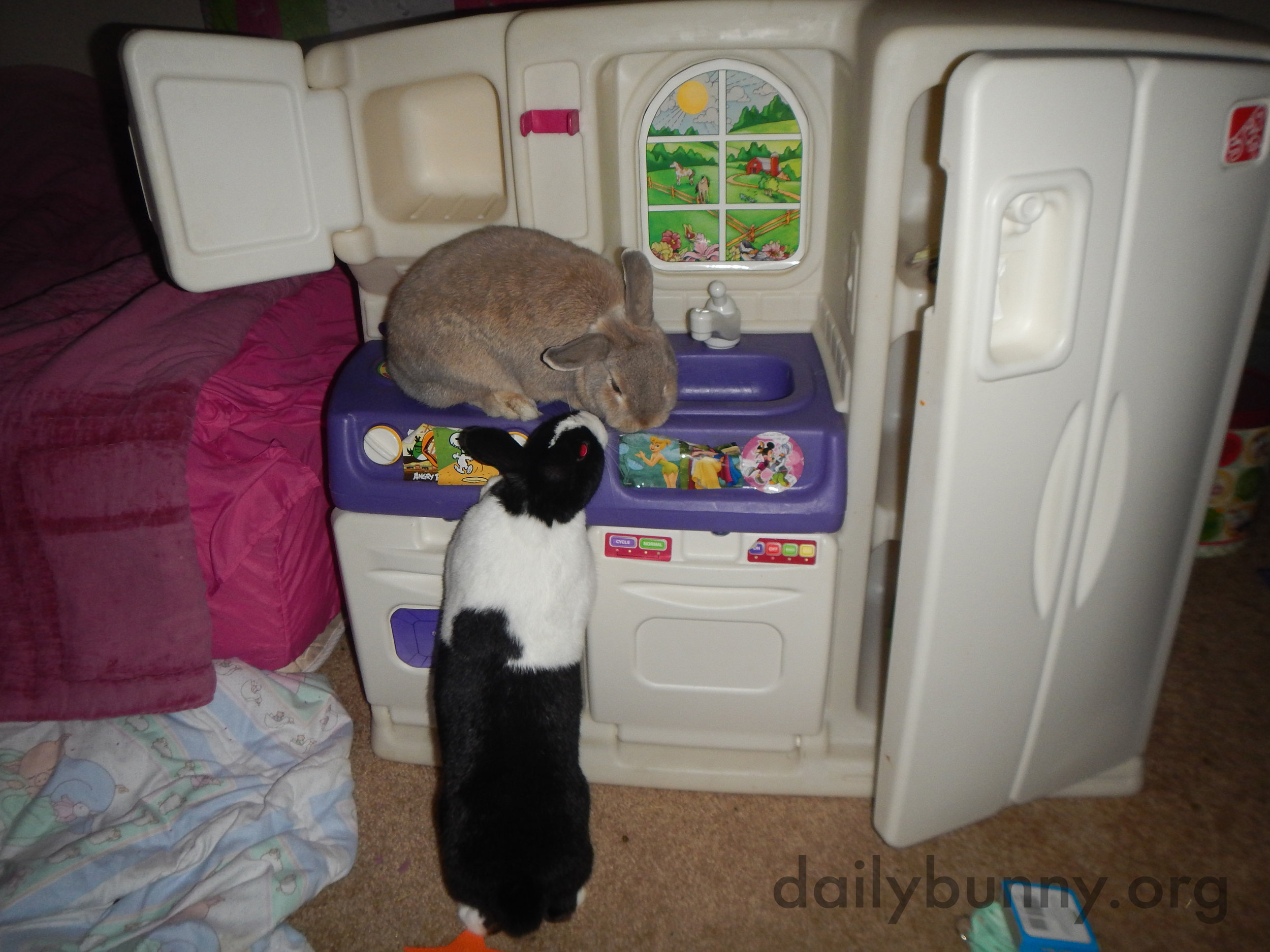 Bunnies Explore a Kitchen That's a Little More Bunny-Sized 2