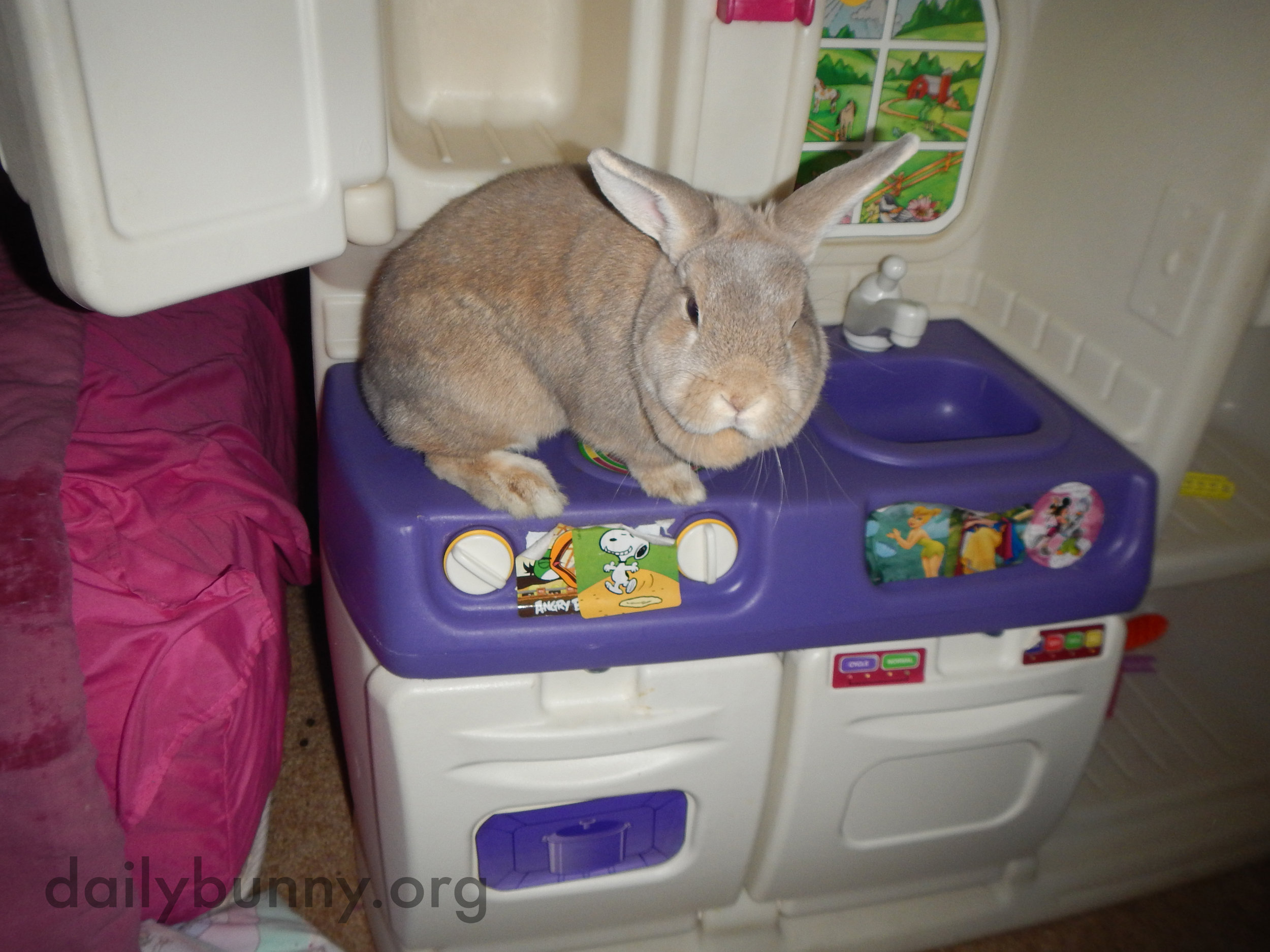 Bunnies Explore a Kitchen That's a Little More Bunny-Sized 3