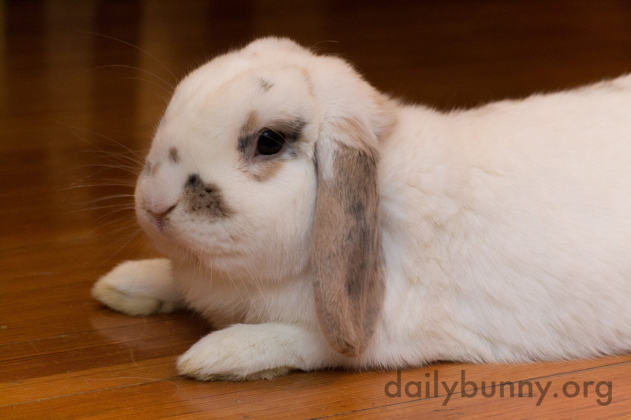Bunny Cools Down on the Floor Before Jumping Back Up to Run Around Again