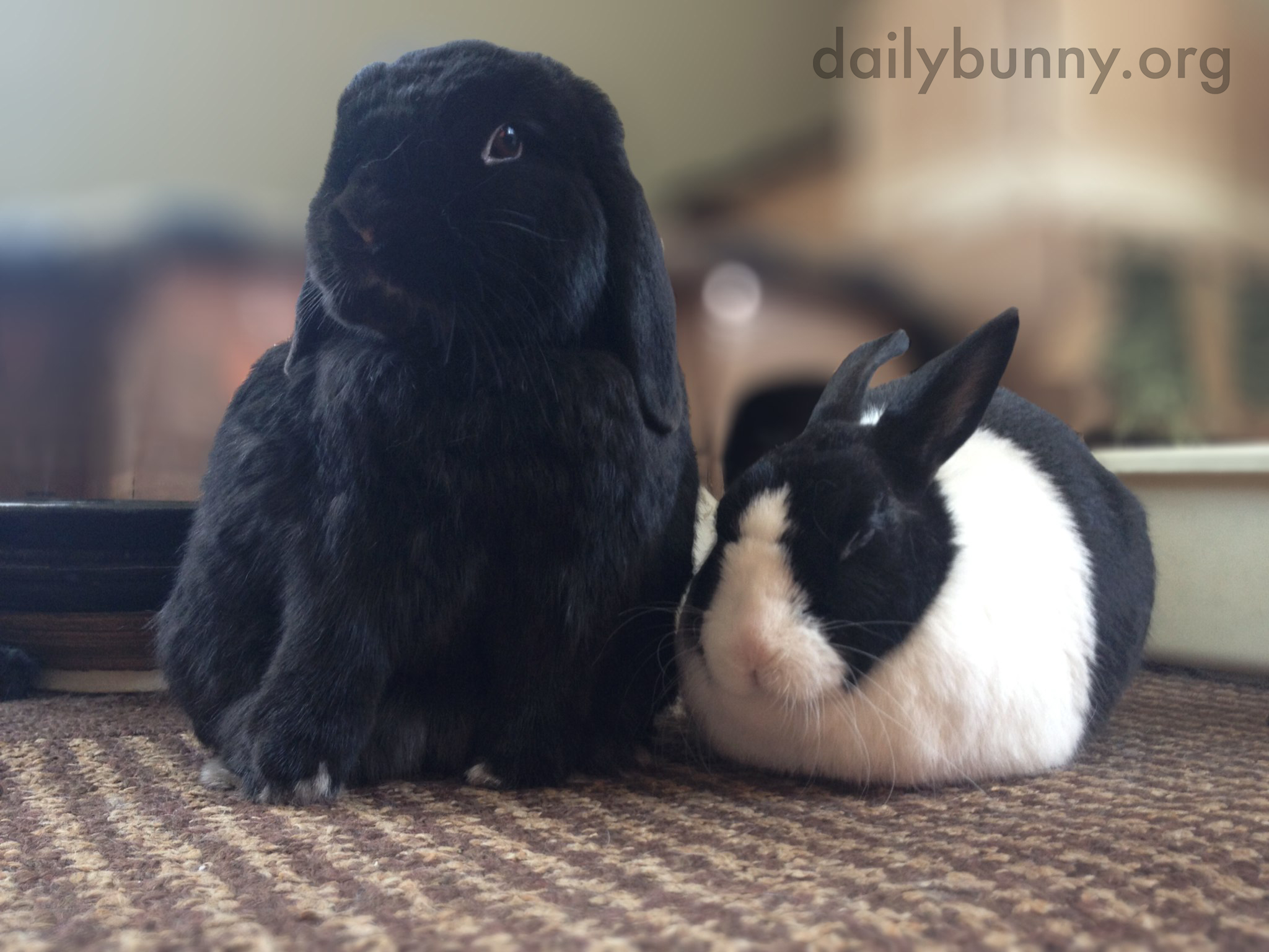 Bunny Friends Are So Fluffy and Round 1