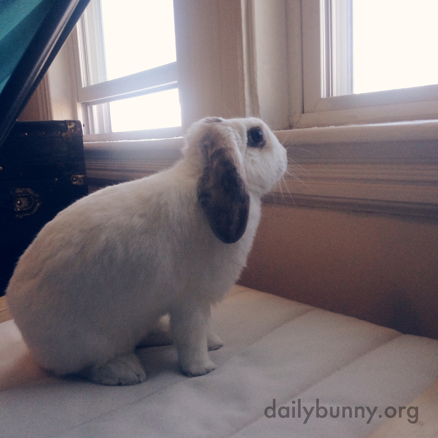 Bunny Is Curious About What's on the Other Side of the Window 1