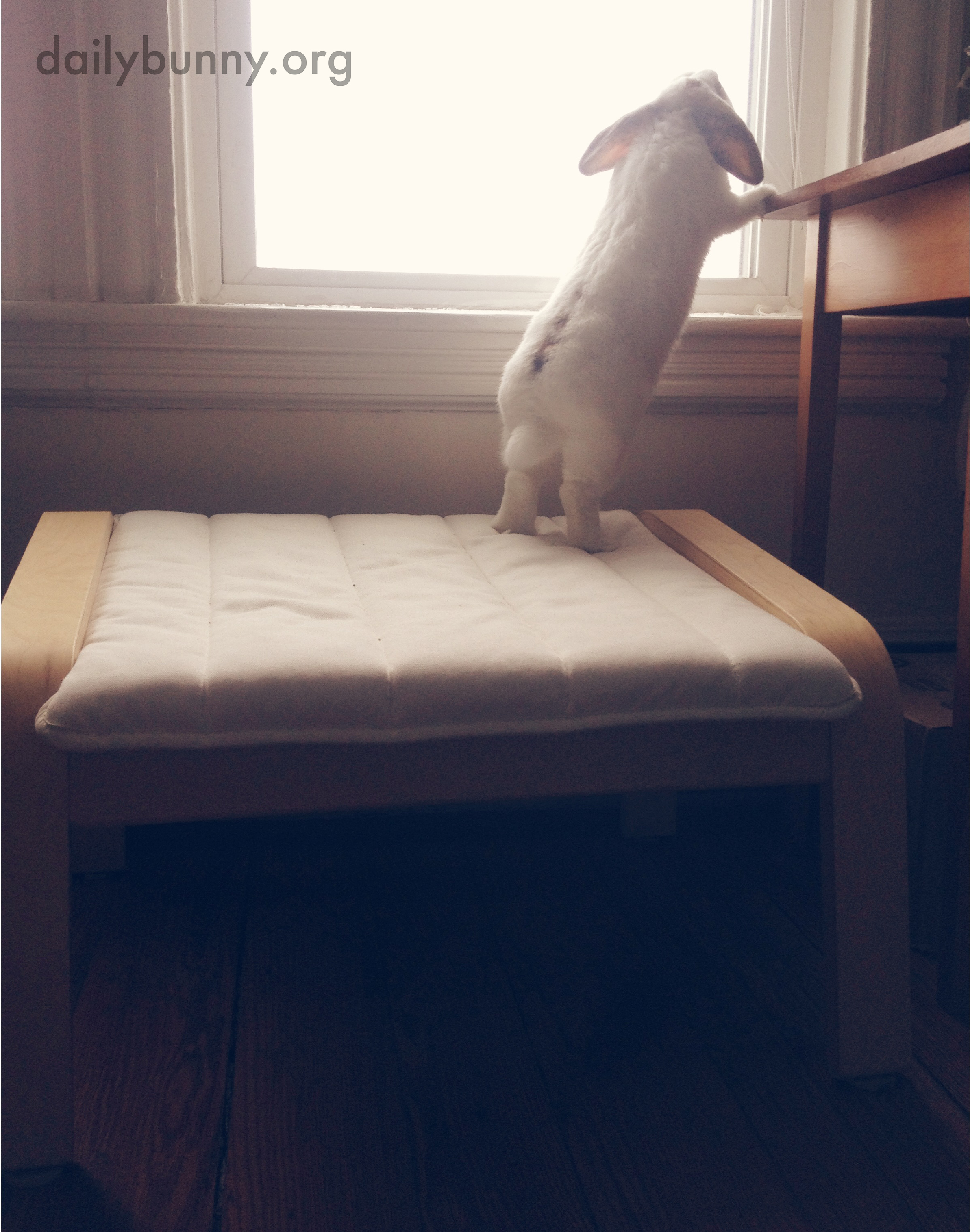 Bunny Is Curious About What's on the Other Side of the Window 2