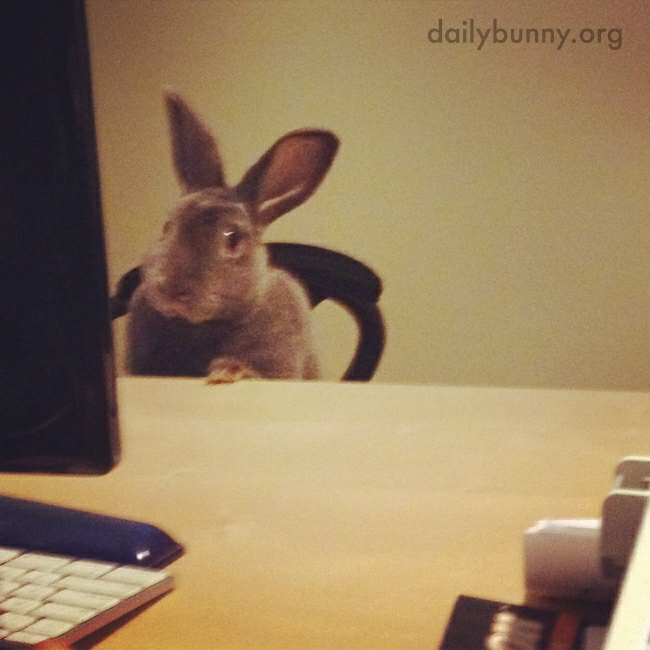 Bunny Is Hard at Work at the Bunny Business Bureau