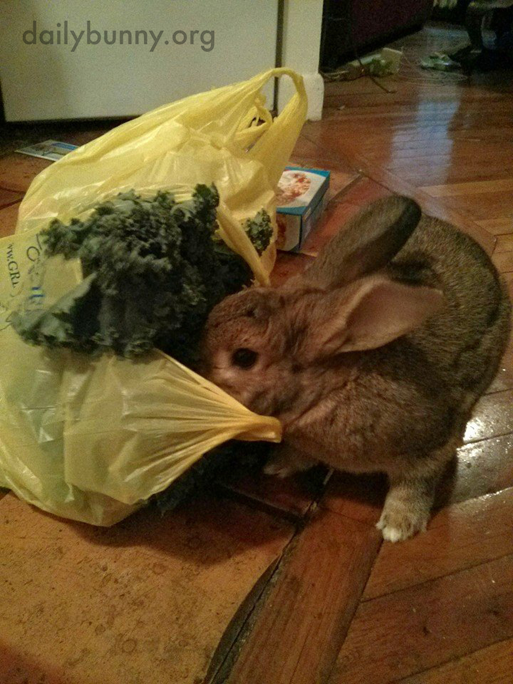 Bunny Very Considerately Helps His Human Unload the Groceries