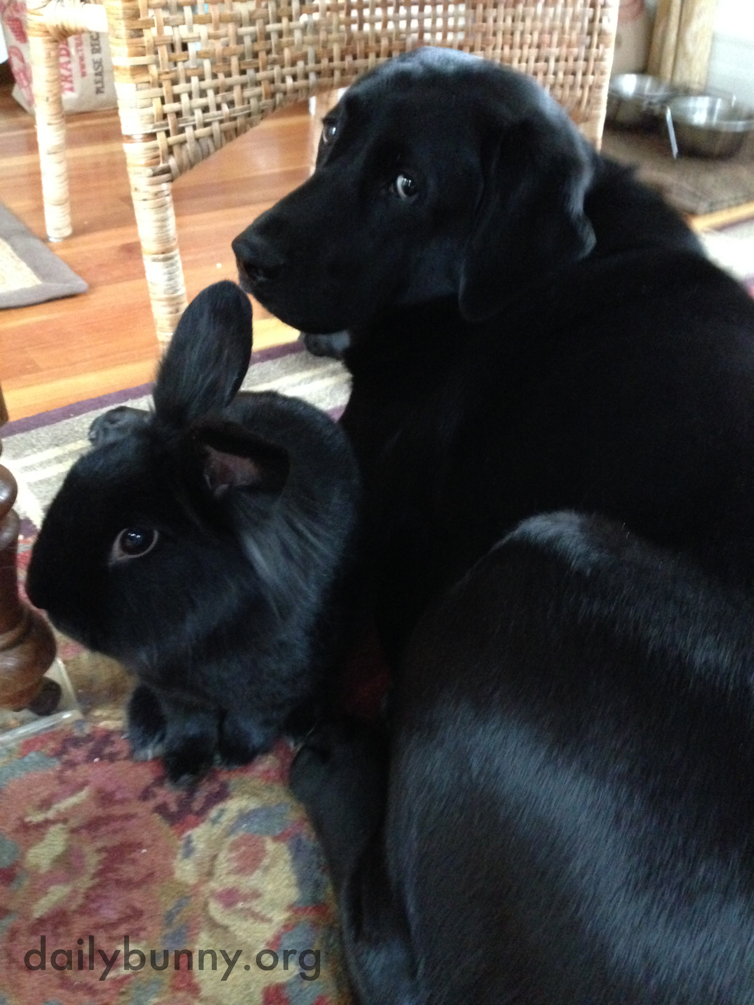 Bunny and His Dog Friend Are Two of a Kind