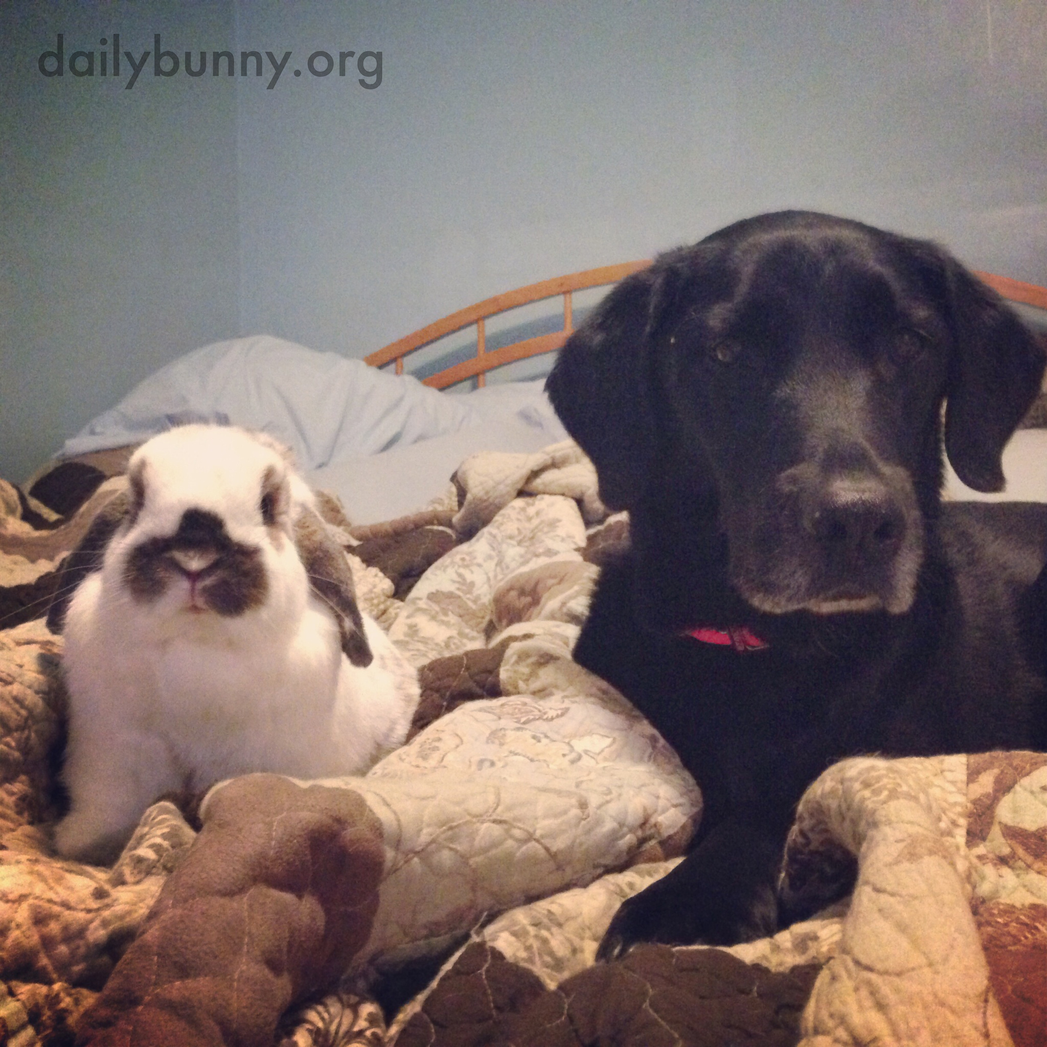 Bunny and His Dog Look into the Camera for Their Portrait