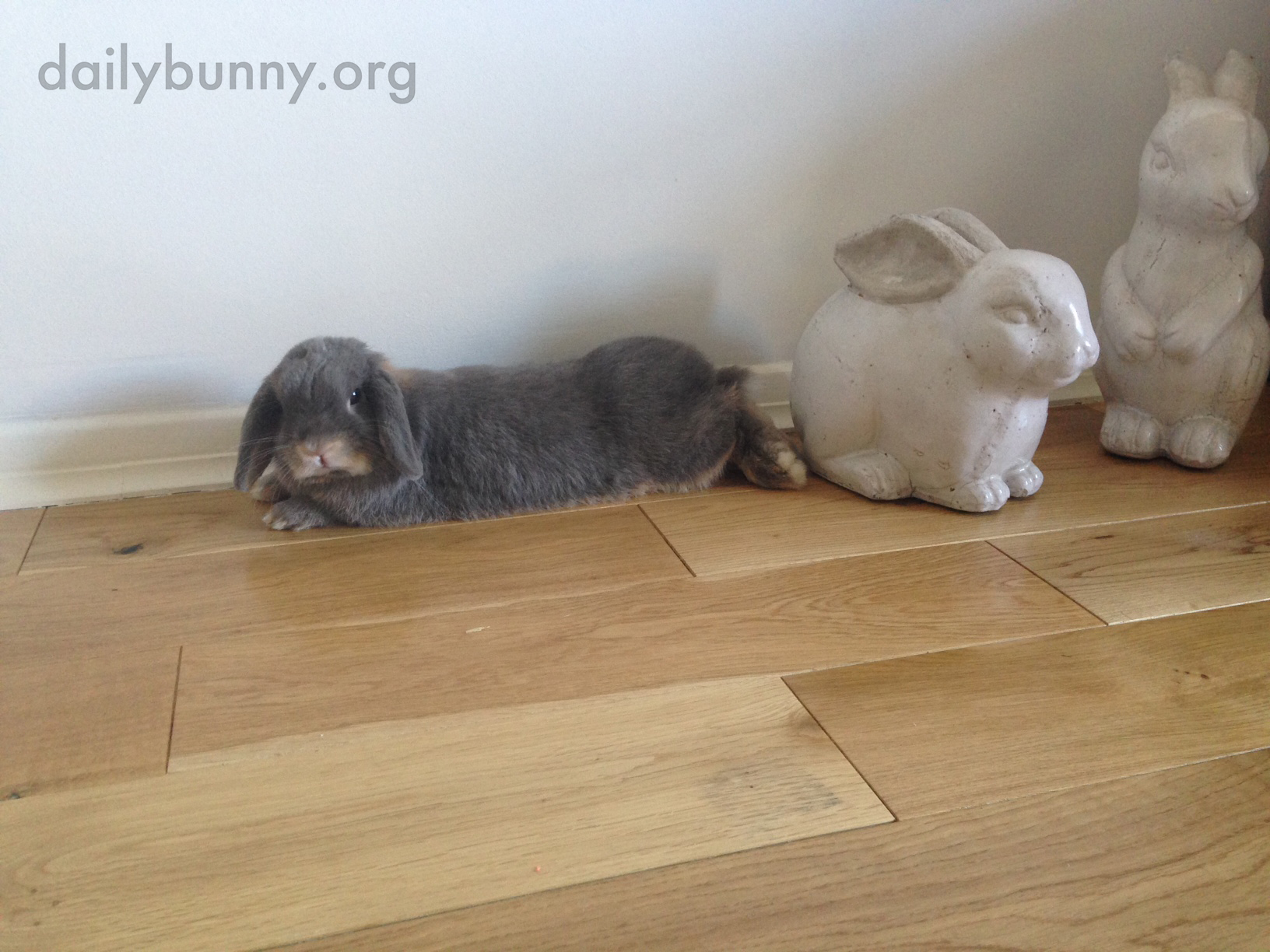Can't a Grumpy Bunny Just Lie Down without a Human Ooh-ing and Aww-ing and Taking Pictures? 2
