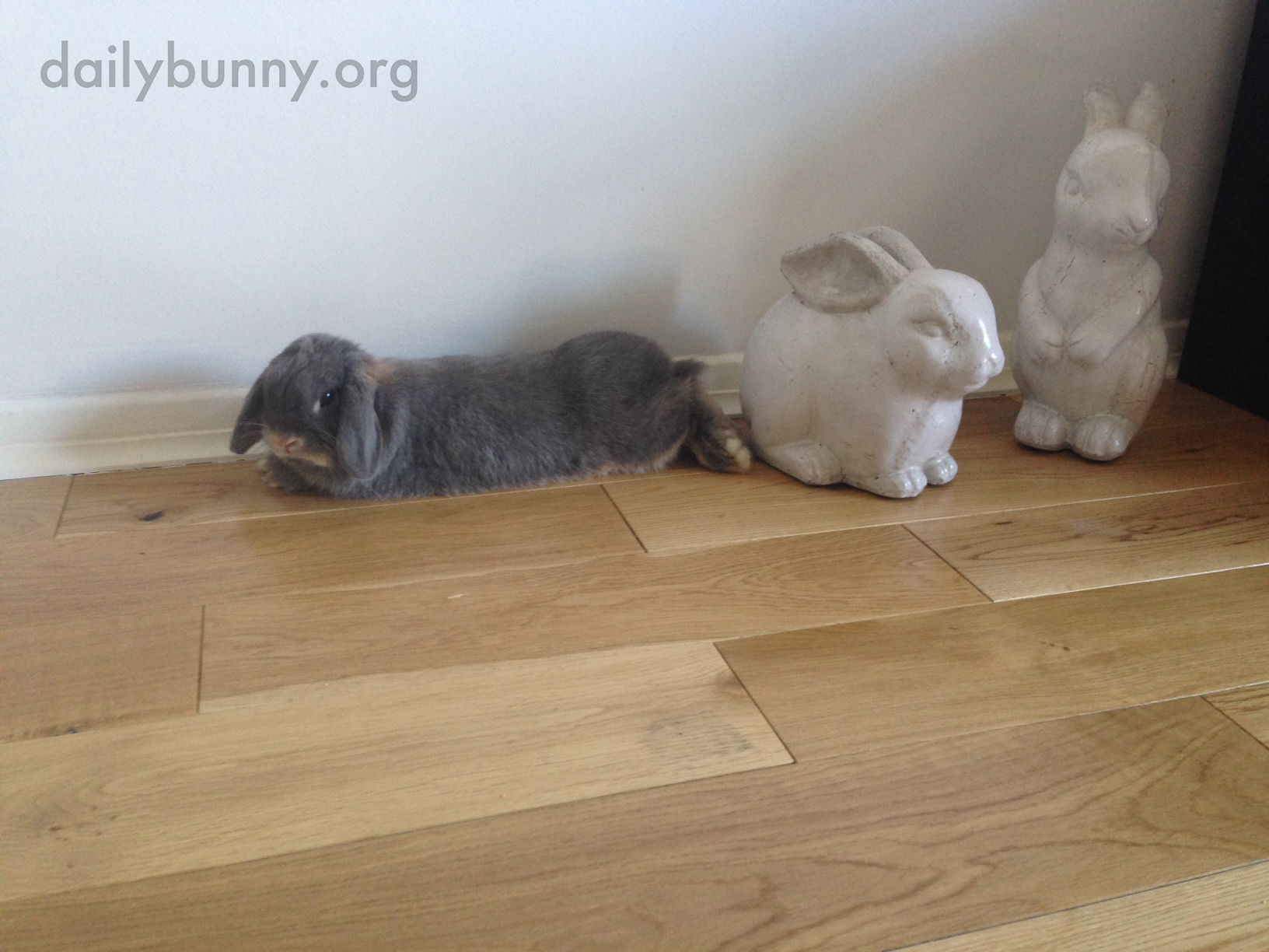 Can't a Grumpy Bunny Just Lie Down without a Human Ooh-ing and Aww-ing and Taking Pictures? 3