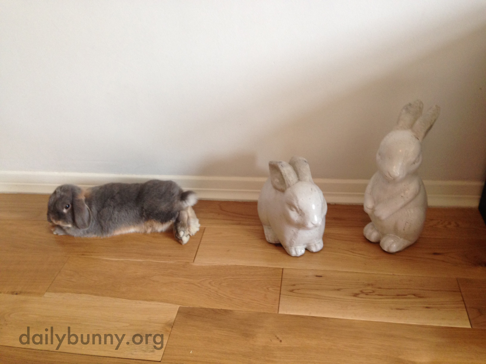 Can't a Grumpy Bunny Just Lie Down without a Human Ooh-ing and Aww-ing and Taking Pictures? 4