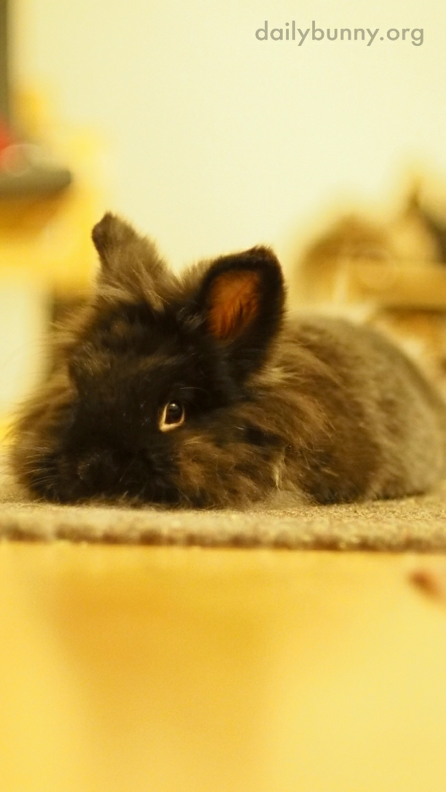 Fuzzy Bunny Is One with the Rug