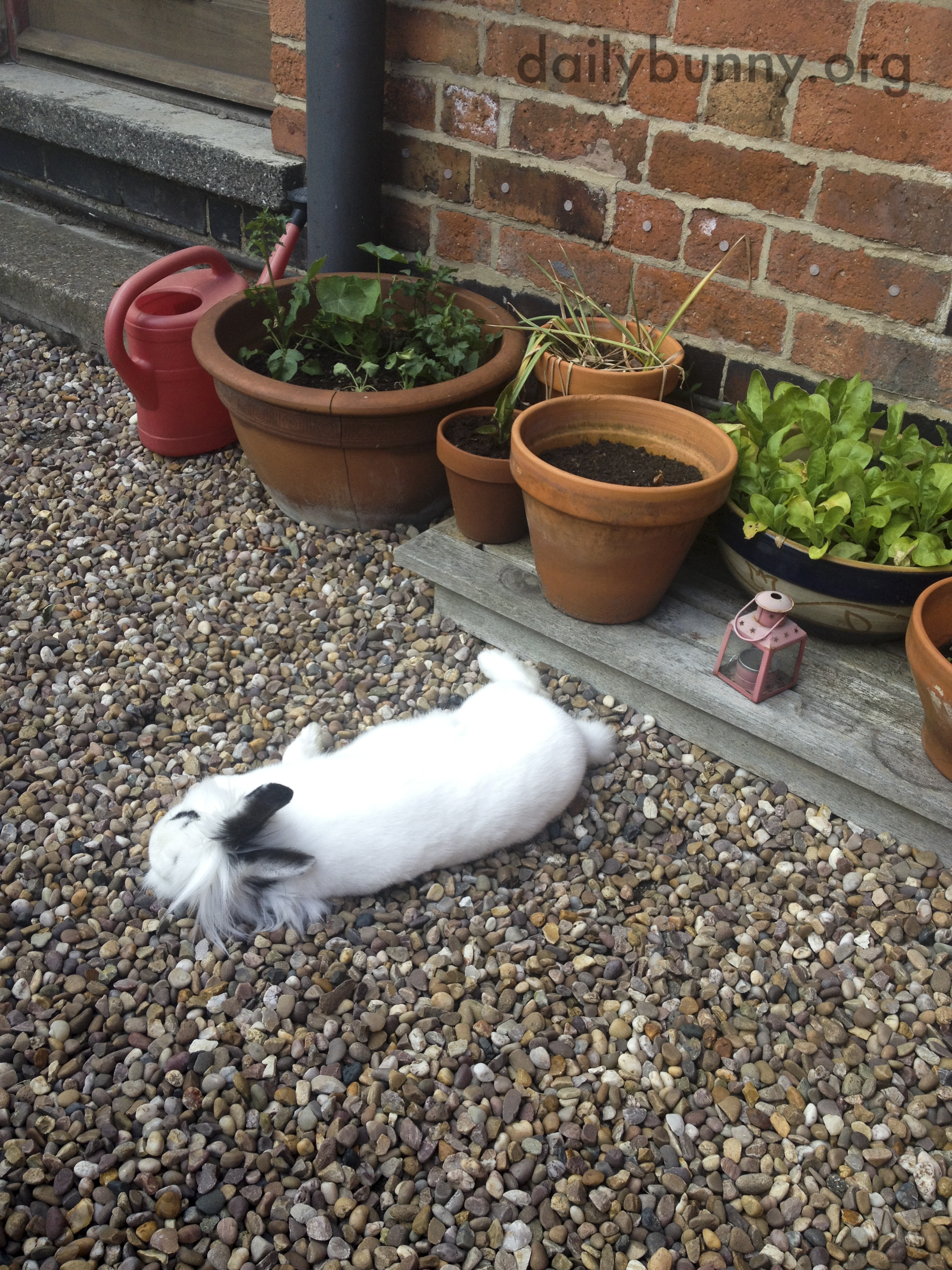 Guarding the Plants Is Just Exhausting! 3