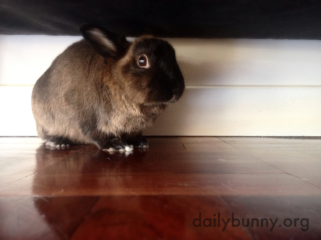 Surprised Bunny Didn't Think Human Knew About His Secret Hiding Place