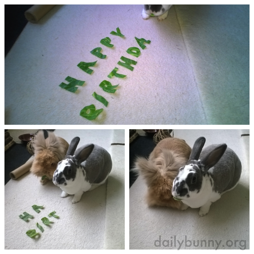 Bunnies Happily Devour Their Birthday Wishes