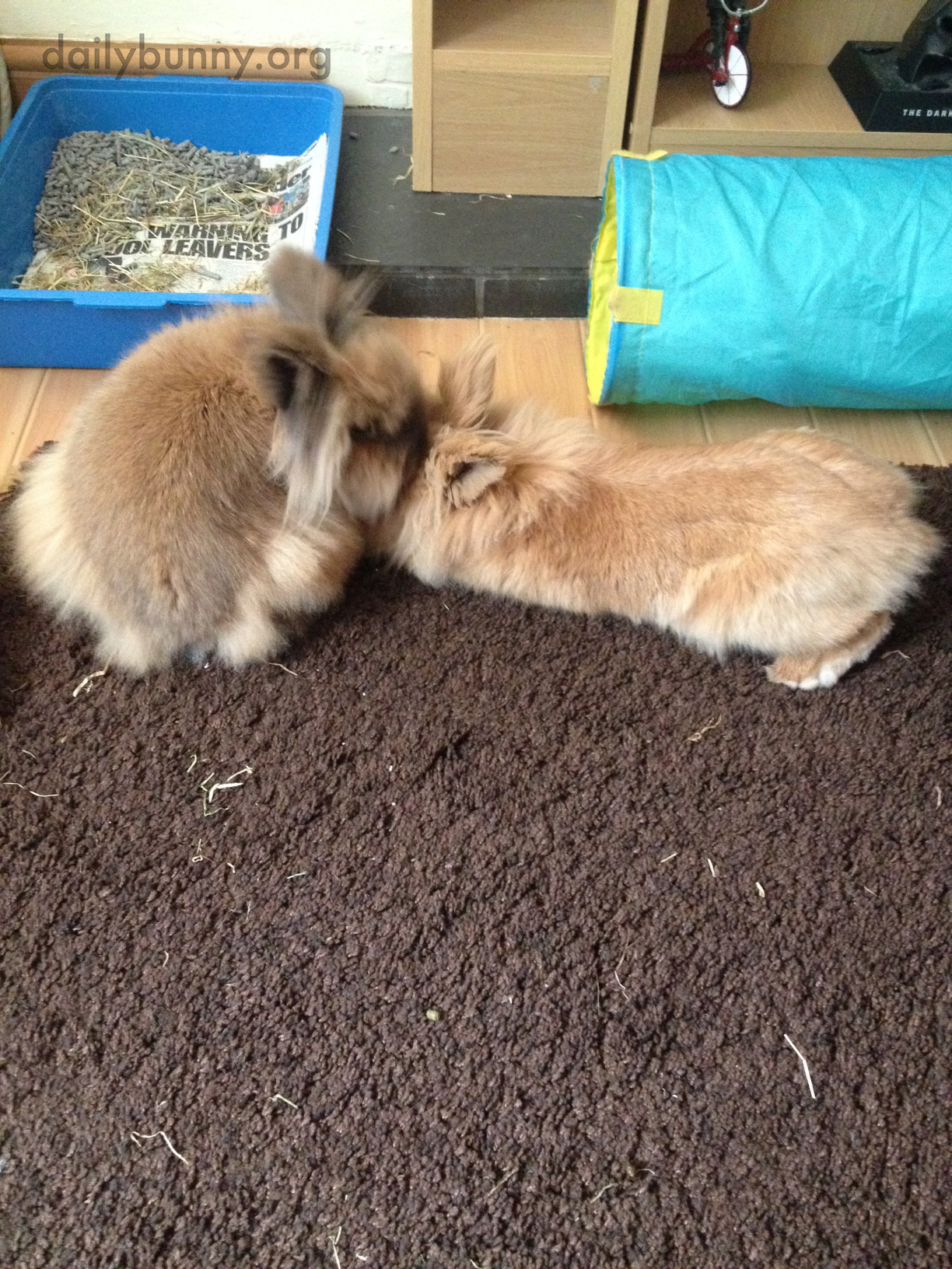 Bunny Brothers Share Kisses After Reuniting 2