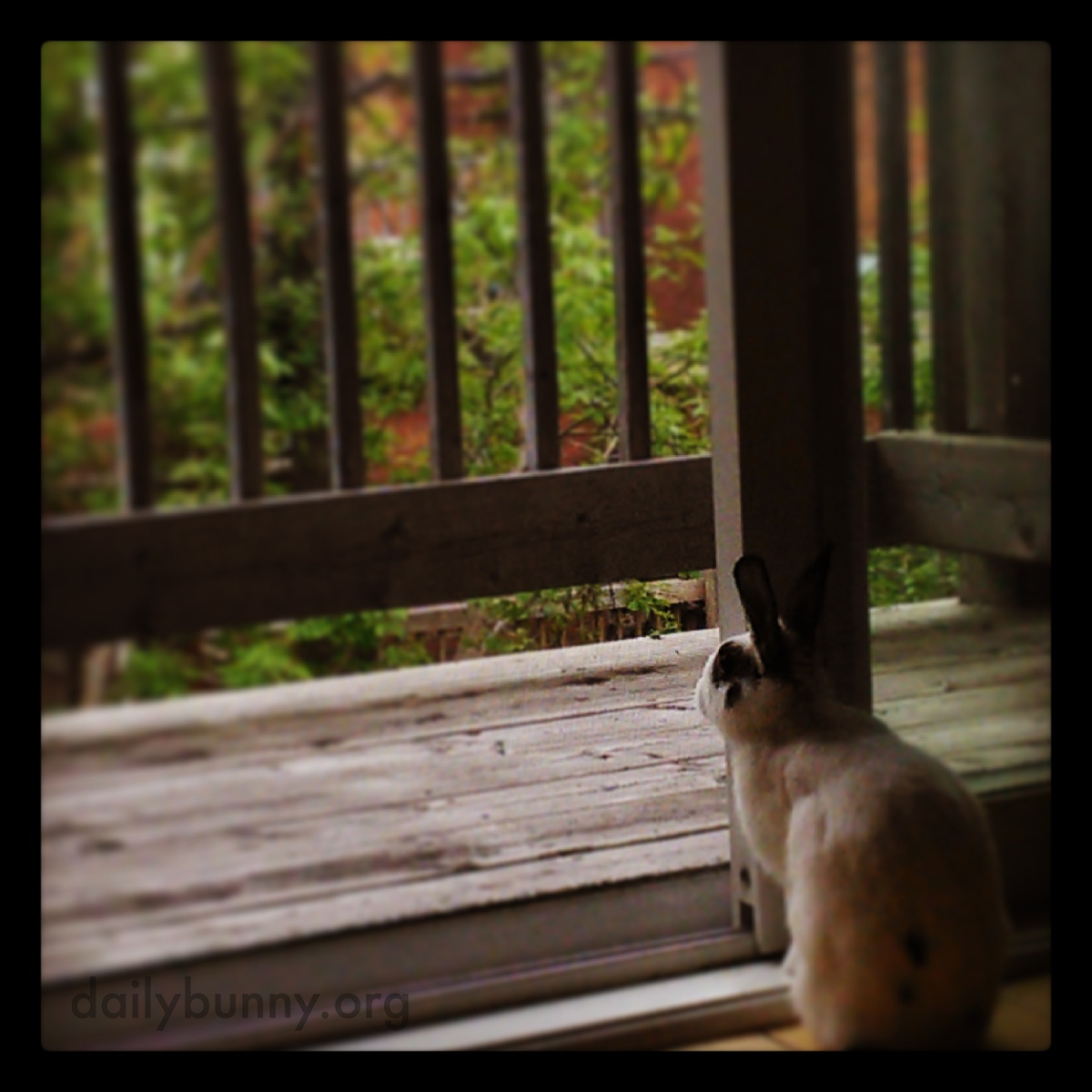 Bunny Checks Out the View from Her New Place