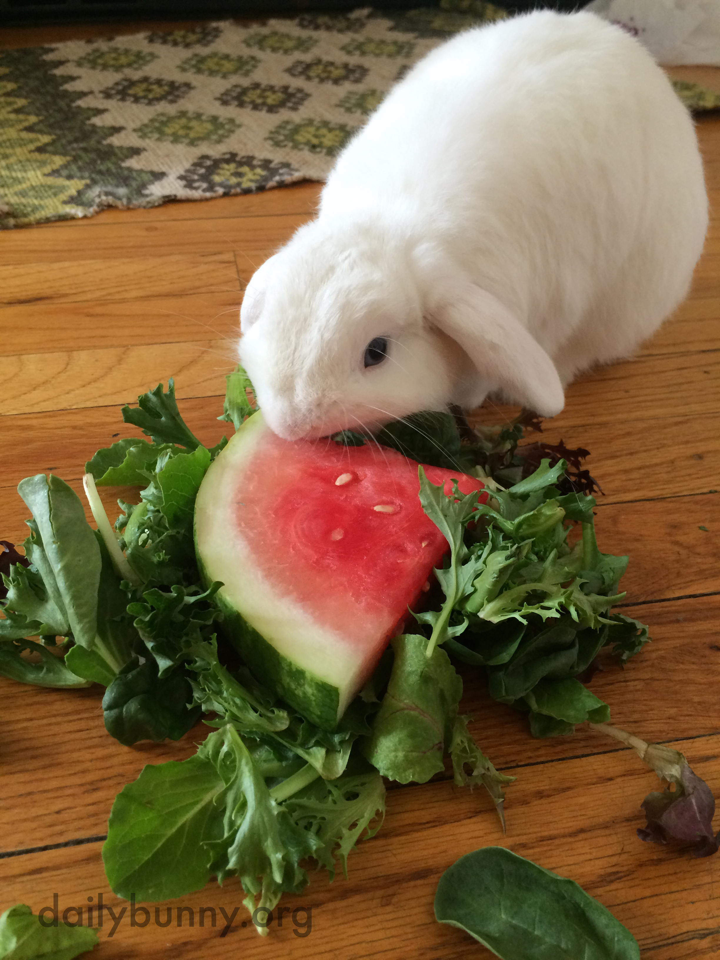 Bunny Enjoys a Bit of Watermelon Salad on a Hot Summer Day