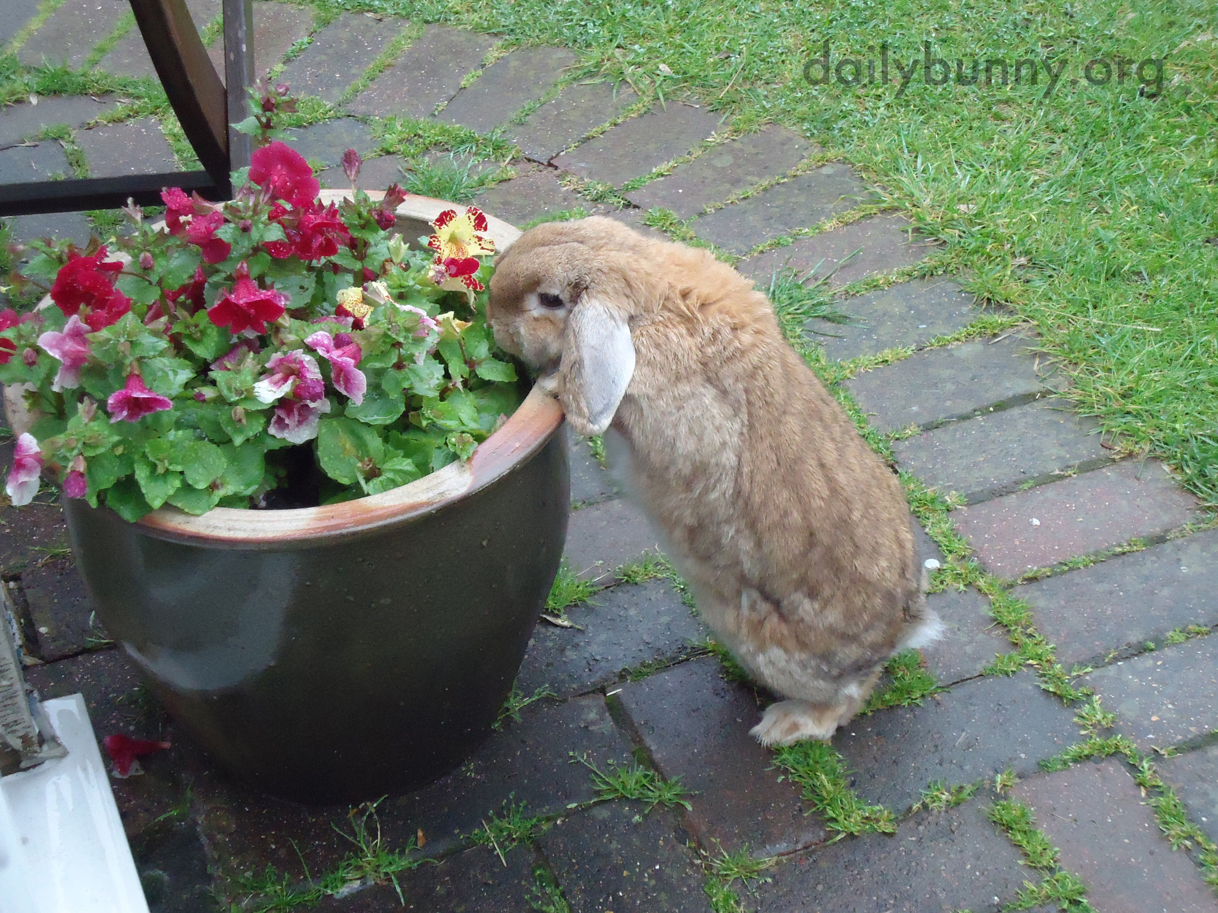 Bunny Has Found the Flowers and Will Help Herself 2