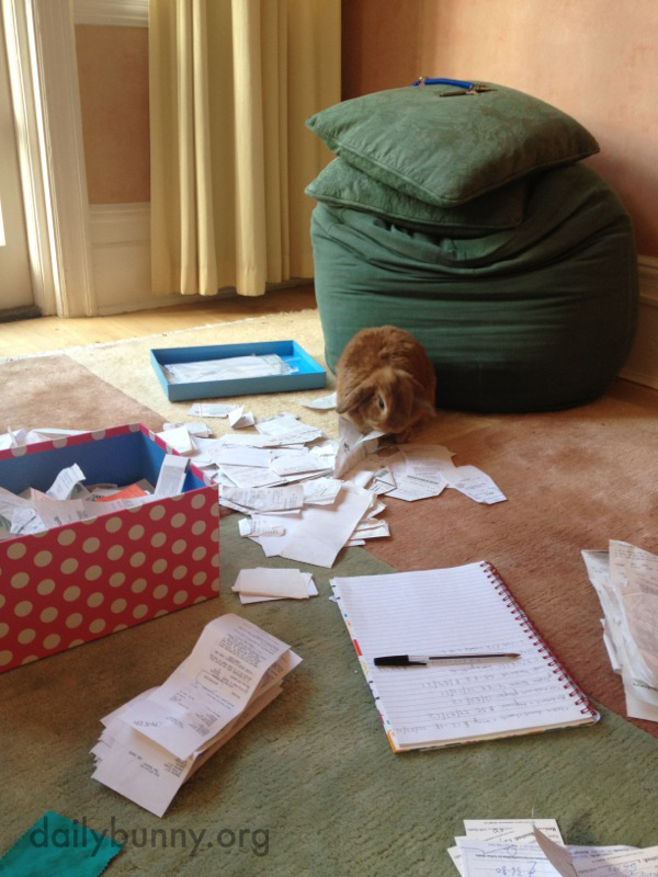 Bunny Helps His Human with the Tax Return