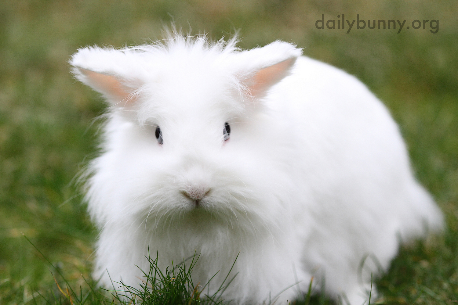 Bunny Is Content to Just Sit in the Grass for Now 2