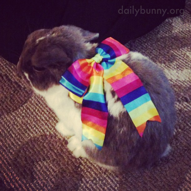 Bunny Is Ready to Go Out on the Town