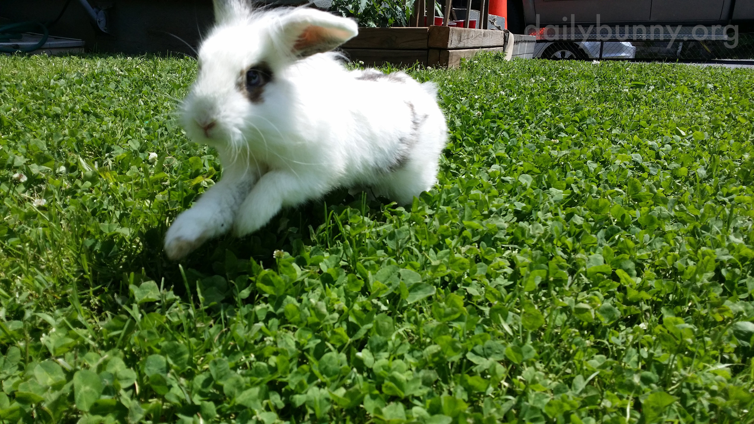Bunny Romps Through the Grass