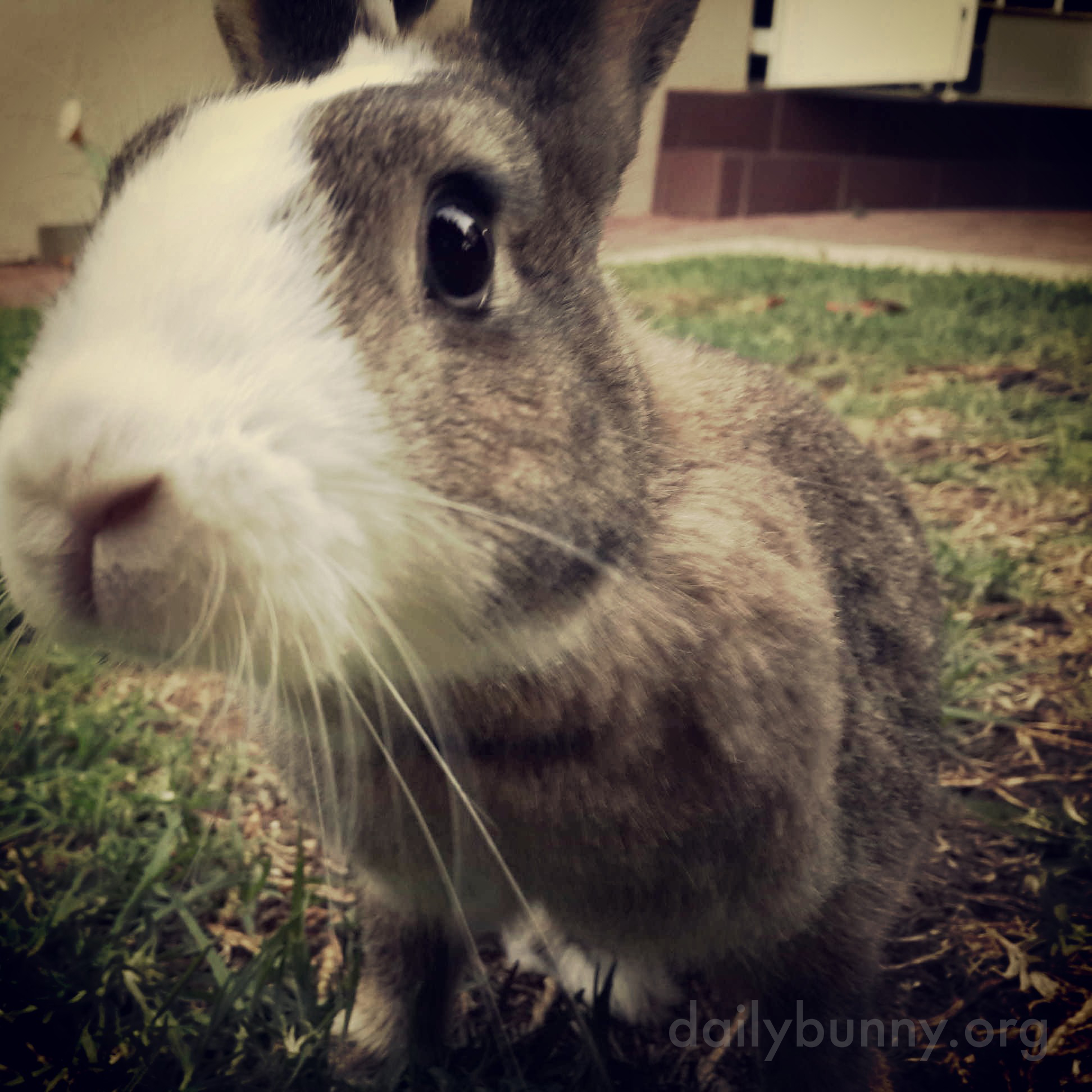 Bunny Seems More Interested in the Camera Than in the Yard