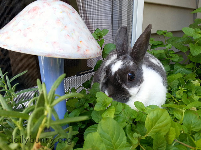 Bunny Sits in Her Herb Garden Among Her Future Meals