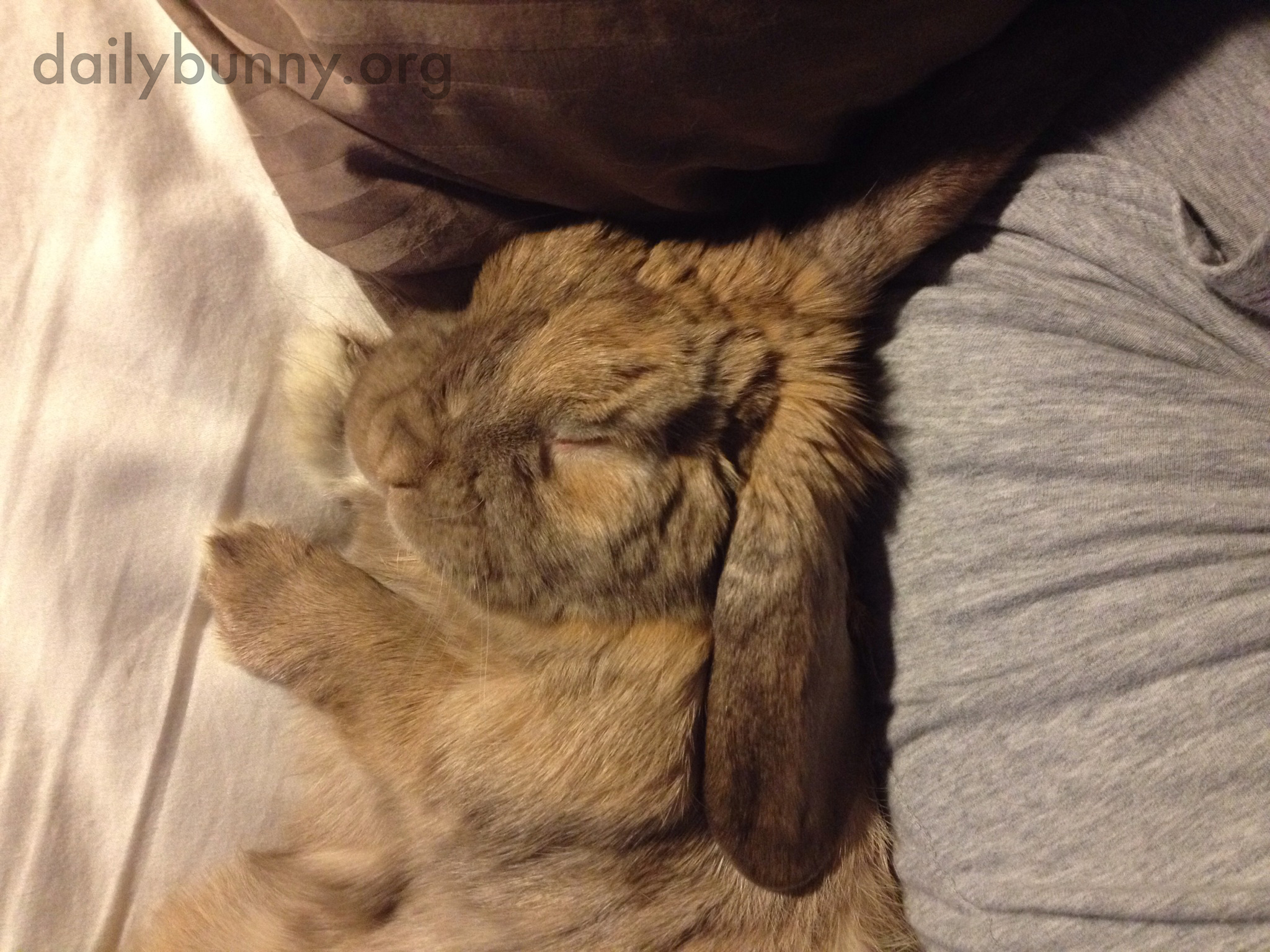 Don't Get Out of Bed or You'll Wake Up Bunny!