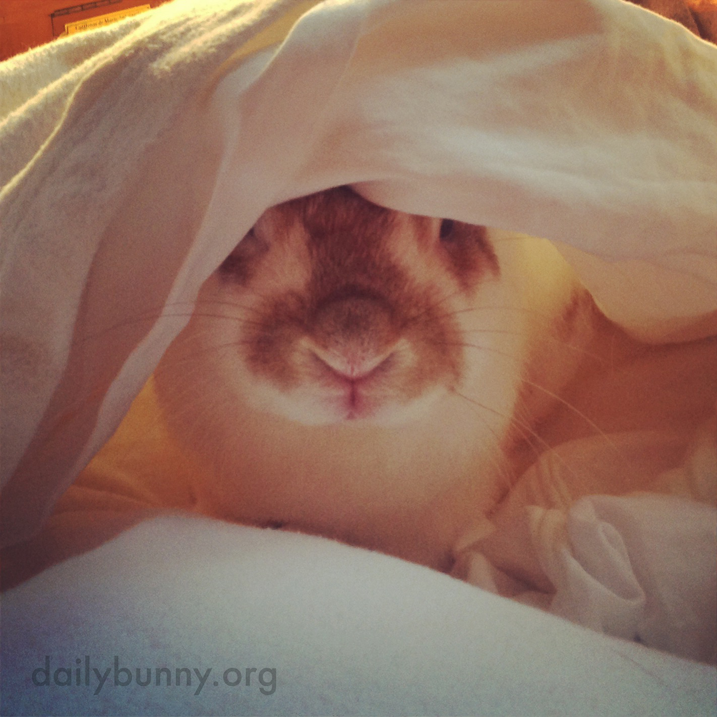 Surprise! Bunny's Hiding Under the Covers!