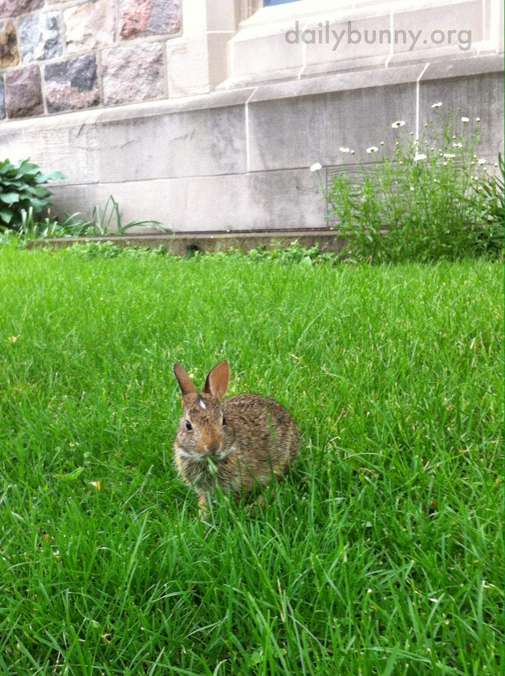Wild Bunny Stops for a Snack