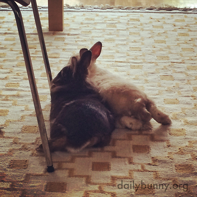 Bunnies Relax Together After a Morning Full of Activities