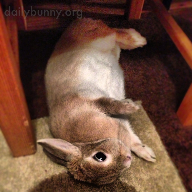 Bunny Can Contort Herself into Optimal Nomming Position