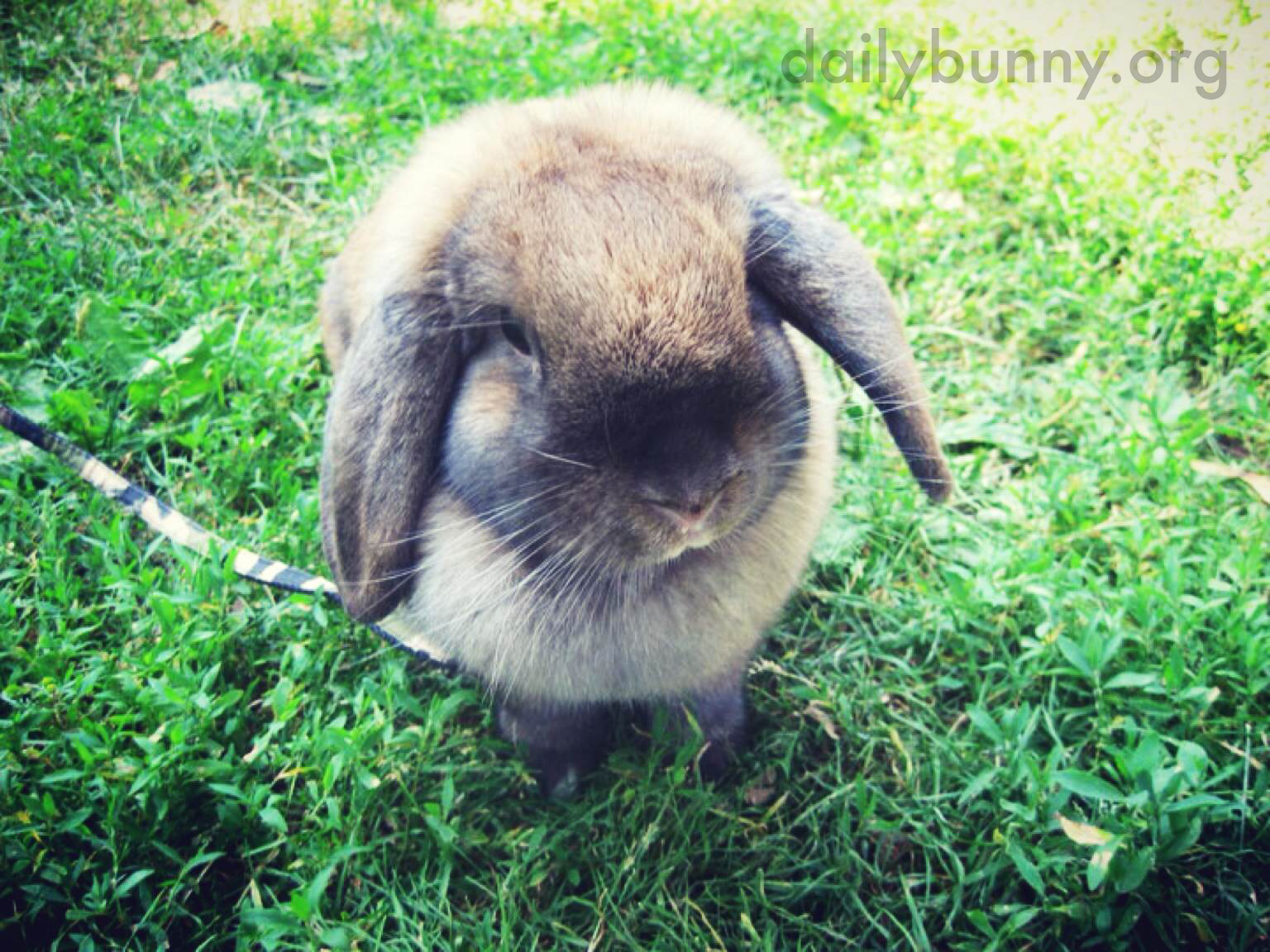 Bunny Gets in a Photograph Before Embarking on a Yard Exploration