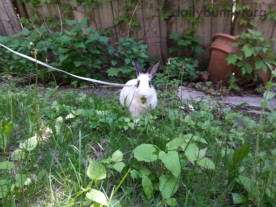 Bunny Has Selected a Leaf to Nibble 1