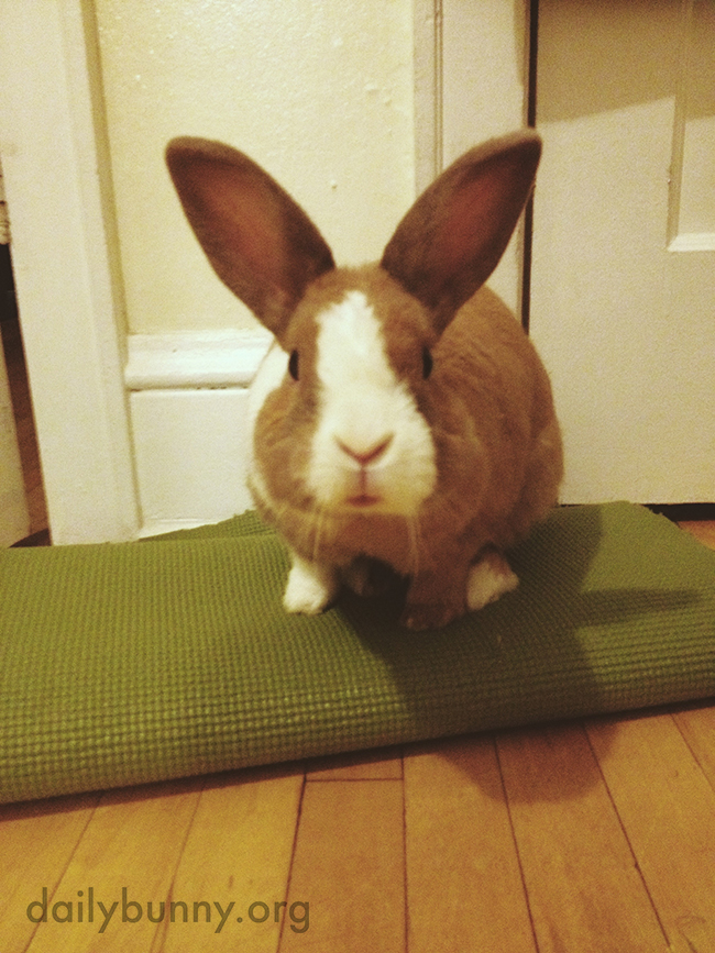 Bunny Is Ready to Show the Yoga Class How Rabbit Pose Is Done
