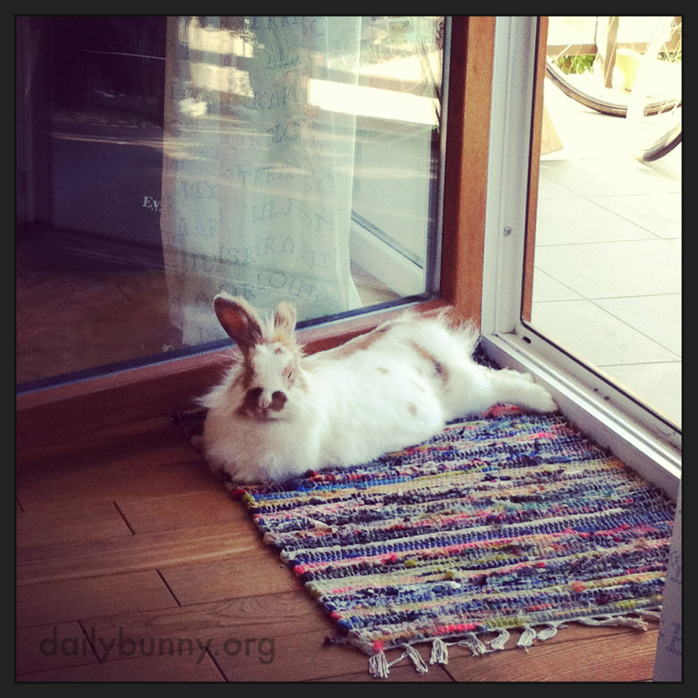 Bunny Likes Being Almost Outdoors