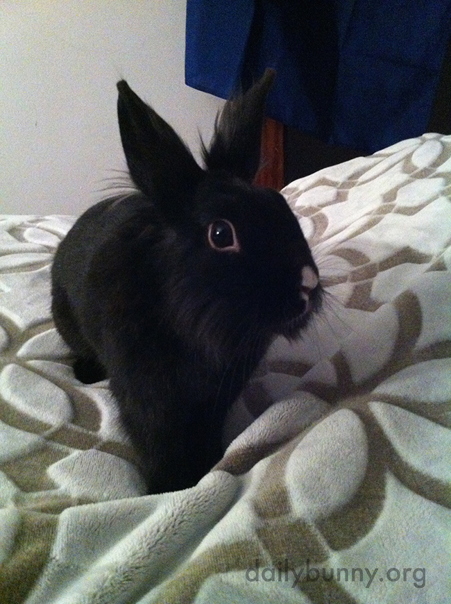 Bunny Looks So Small When Sitting on a Human-Sized Bed 2