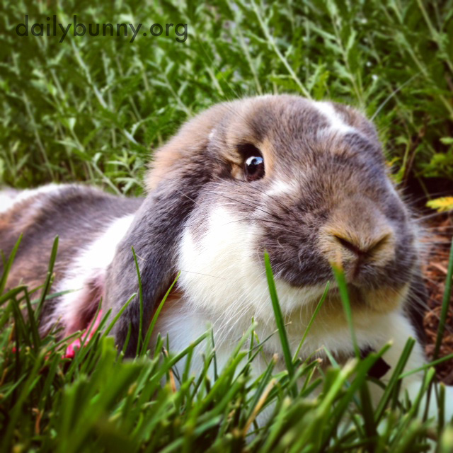 Bunny Makes Himself Comfortable in the Grass