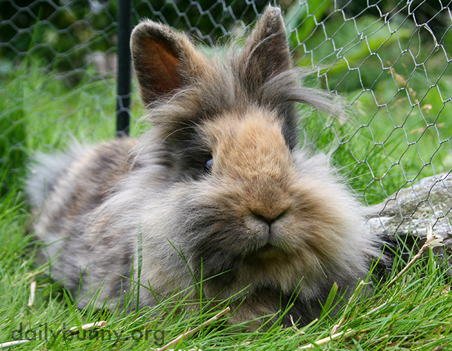 Bunny Relaxes in the Grass and Feels the Breeze in Her Fur