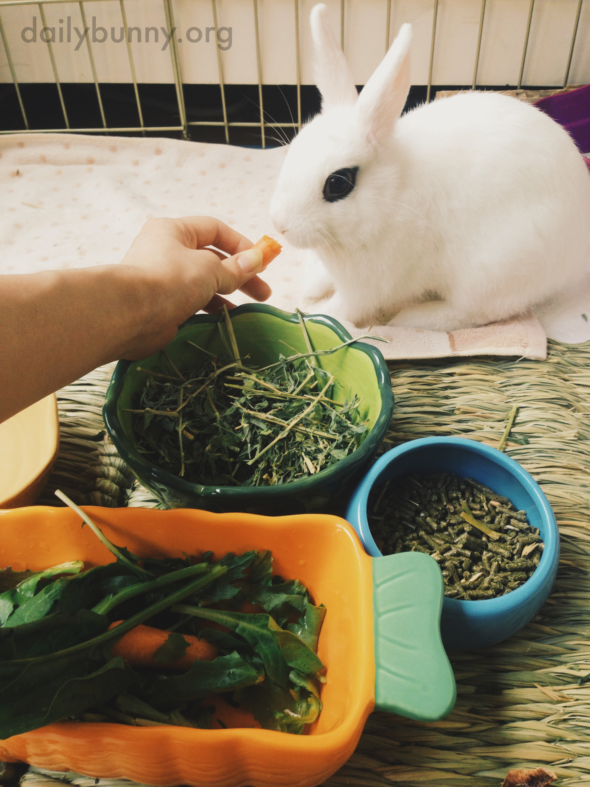 Bunny Tastes Vegetables for the First Time