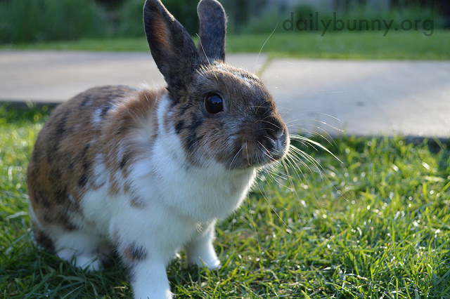 Bunny, the Sunlight Just Glints Off Your Whiskers!
