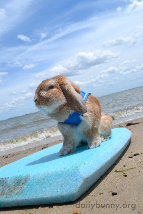 Everybunny's Gone Surfin'... Surfin' USA