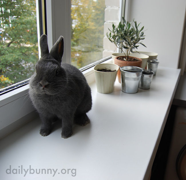 If Bunny Could Harumph, This Is What It Would Look Like