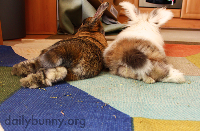 Two Bunny Bums Are Double the Cuteness