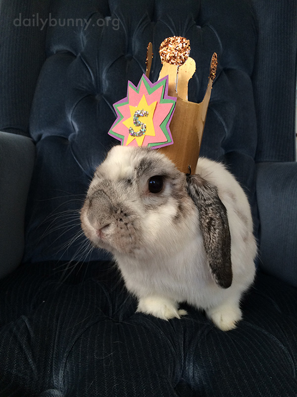 Birthday Bunny Gets a Birthday Crown 1