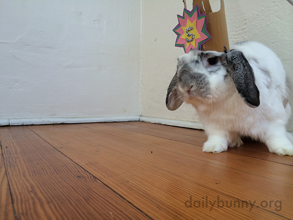 Birthday Bunny Gets a Birthday Crown 2