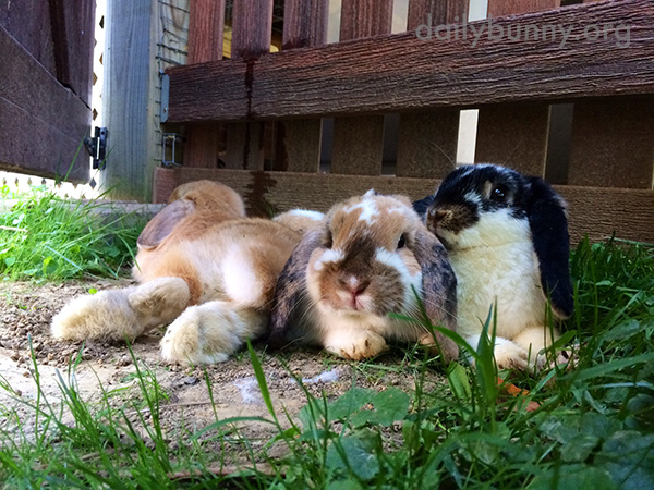 Bunnies Lie Down, Relax, and Enjoy an Afternoon Outdoors Together