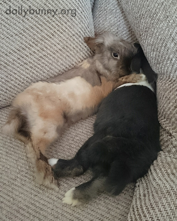 Bunnies Snuggle in a Corner of the Sofa
