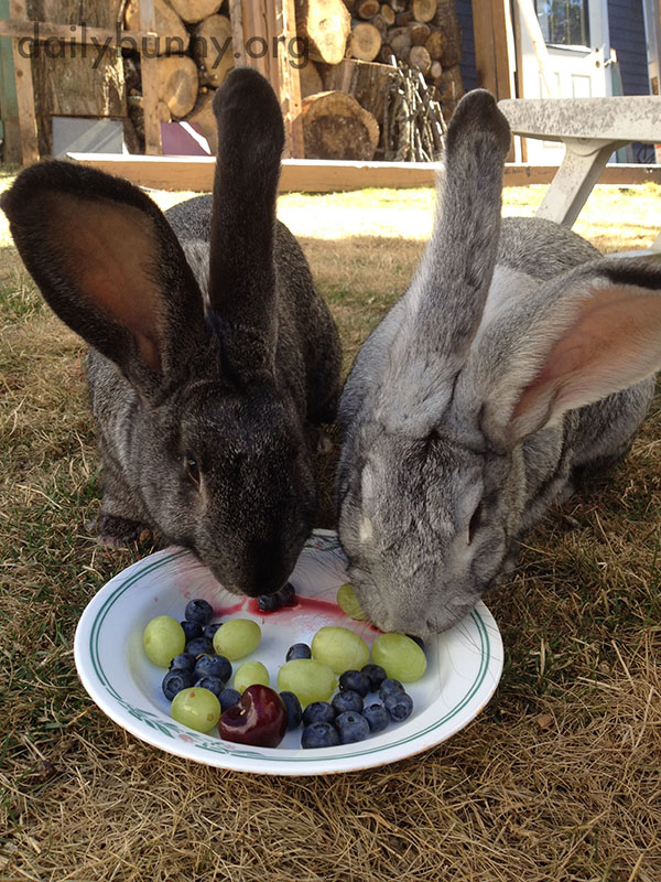 Bunny Brothers Share a Fruit Plate
